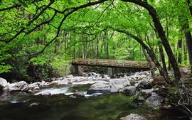 Forest, creek, stones, bridge, nature