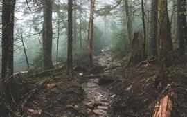 Bosque, árboles, arroyo, rocas, niebla