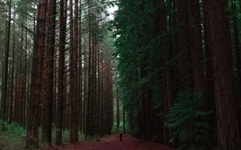 Preview wallpaper Forest, trees, path, man