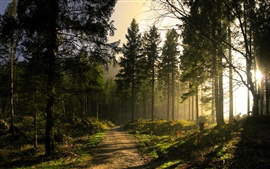 Preview wallpaper Forest, trees, path, sun rays, morning