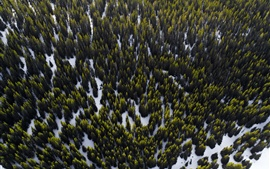 Forest, trees, snow, top view