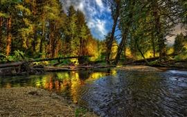 Bosque, árboles, corriente, agua, naturaleza