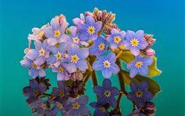 Fotografia macro de esqueça, pétalas azuis