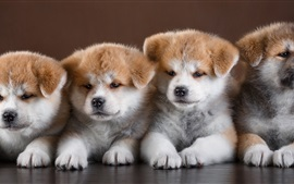 Four cute puppies front view