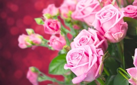 Preview wallpaper Fresh pink roses, beautiful flowers