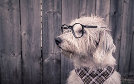 Preview wallpaper Funny animals, dog, glasses
