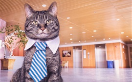 Preview wallpaper Funny cat, tie