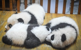 Preview wallpaper Furry panda cubs sleep