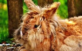 Пушистый дикий кролик