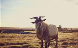 Коза есть пищу, траву, рог