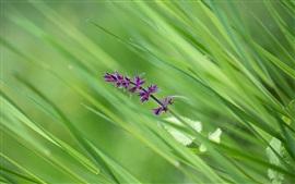 미리보기 배경 화면 풀, 보라색 작은 꽃