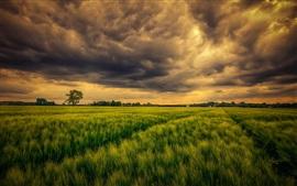 Campo verde, nuvens, céu, natureza