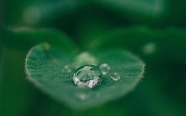 Preview wallpaper Green leaf, dew, blurry