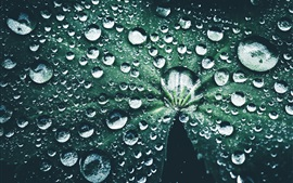 Green leaf, many water drops
