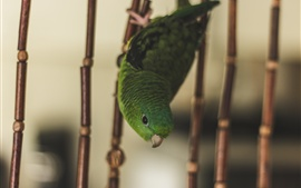 Preview wallpaper Green parrot in cage