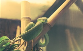 Preview wallpaper Green snake, reptile