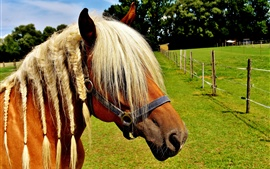 Preview wallpaper Haflinger, horse, cool hairstyle