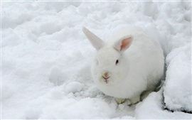 Preview wallpaper Hare, white rabbit, snow