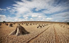 Hay, field, clouds