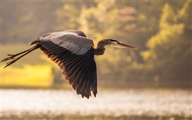 Preview wallpaper Heron flying, wings