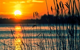 Preview wallpaper Lake, reeds, sunset