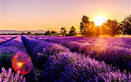 Preview wallpaper Lavender field, flowers, sunset, France