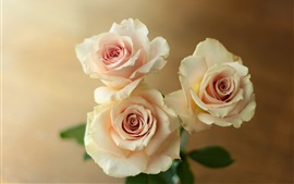 Rosas rosas claras
