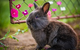 Preview wallpaper Lovely gray rabbit, furry pet