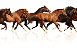 Preview wallpaper Many horses running, white background