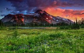 Prado, montanhas, flores silvestres, árvores, crepúsculo