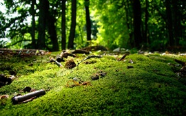 Preview wallpaper Moss, grass, forest, nature scenery