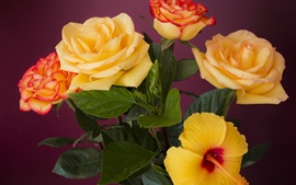 Preview wallpaper Orange roses and hibiscus flowers