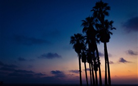 Palm trees, night