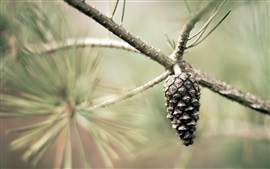 Preview wallpaper Pine tree seed
