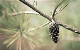 Semilla de árbol de pino
