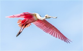 Preview wallpaper Pink wings bird flying in sky