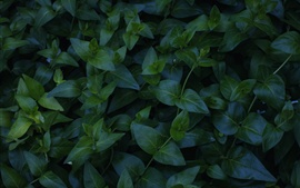 Plants, green leaves