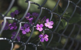 Preview wallpaper Purple flowers, fence