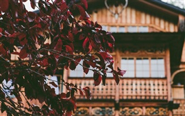 Hojas rojas, ramitas, casa