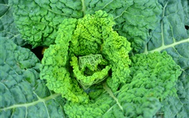 Preview wallpaper Savoy cabbage, vegetable leaves close-up