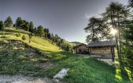 Pendiente, hierba, árboles, cabaña de madera, sol