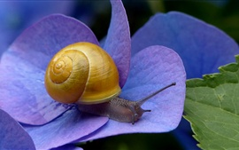 Preview wallpaper Snail, blue flowers
