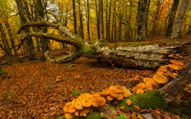 Preview wallpaper Spain, Basque Country, autumn, trees, moss, mushrooms