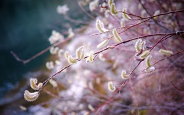 Spring, twigs, buds