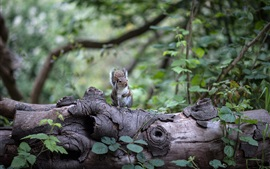 Squirrel, forest, leaves