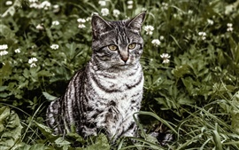 Preview wallpaper Striped cat, sit on grass