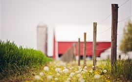 Preview wallpaper Summer, fence, dandelions, grass, blurry