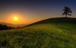 Preview wallpaper Summer, grass, tree, hill, sunrise