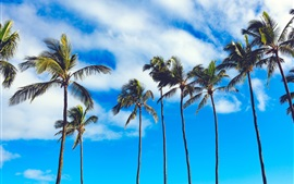 Preview wallpaper Summer, palm trees, blue sky, clouds