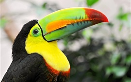 Preview wallpaper Tropical birds, toucan, colorful